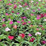 Chế phẩm sinh học cho cây hoa
