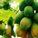 Cây trồng Ngắn ngày mang lại Hiệu quả Kinh tế cao