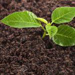 """Tầm quan trọng của đất đối với cây trồng, """"Đất Sống – Cây khỏe"""""""