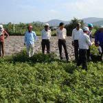 Canh tác cải tạo giải cứu đất nông nghiệp bạc màu