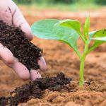 Vô cơ, Hữu cơ – Phân bón sạch cho Nông nghiệp bền vững