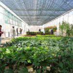 Lợi ích cho cây trồng khi sử dụng chế phẩm Sinh Học