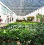 Lợi ích của việc sử dụng chế phẩm Sinh Học cho cây trồng