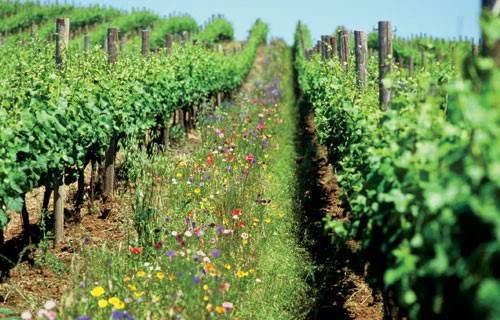 Trang trại nông nghiệp hữu cơ