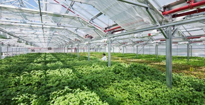 Hệ thống nhà kính trồng rau hữu cơ