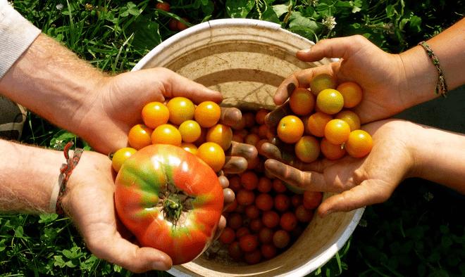 Sản phẩm của nông nghiệp hữu cơ