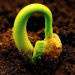 5 biện pháp phòng trừ tổng hợp dịch bệnh hại cây trồng