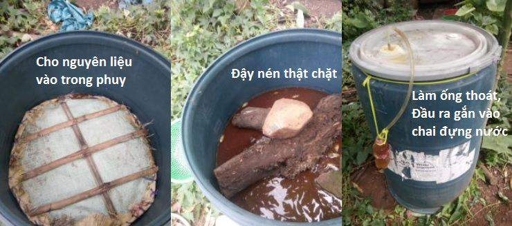 Cách ủ phân cá bón cho cây trồng