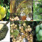 Lưu ý đối với cây ăn trái Nam Bộ vào mùa khô