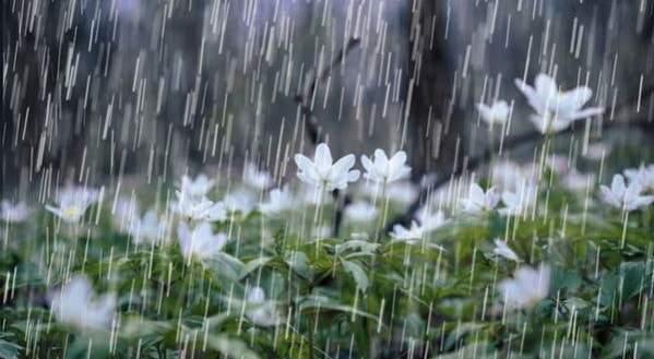 Cơn mưa trái mùa trong mùa khô hạn thường chứa axid