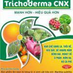 Cách lựa chọn và sử dụng nấm Trichoderma đúng cách