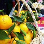 Cam Xã Đoài – một loại cam đặc sản thơm ngọt nổi tiếng của xứ Nghệ đã có giá 70.000 đồng/trái.