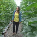 Nữ kỹ sư khởi nghiệp từ trồng dưa lưới công nghệ cao ở miền sông nước.