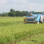 Doanh nghiệp sản xuất lúa gạo không cần sử dụng ruộng: Tại sao không ?