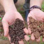 Quy trình cải tạo đất phèn chua, thoái hóa do phân hóa học