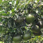 Giá trị mà trung, vi lượng mang lại cho cây trồng