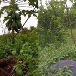 Cải tạo đất bằng cỏ giúp tiết kiệm chi phí đầu tư