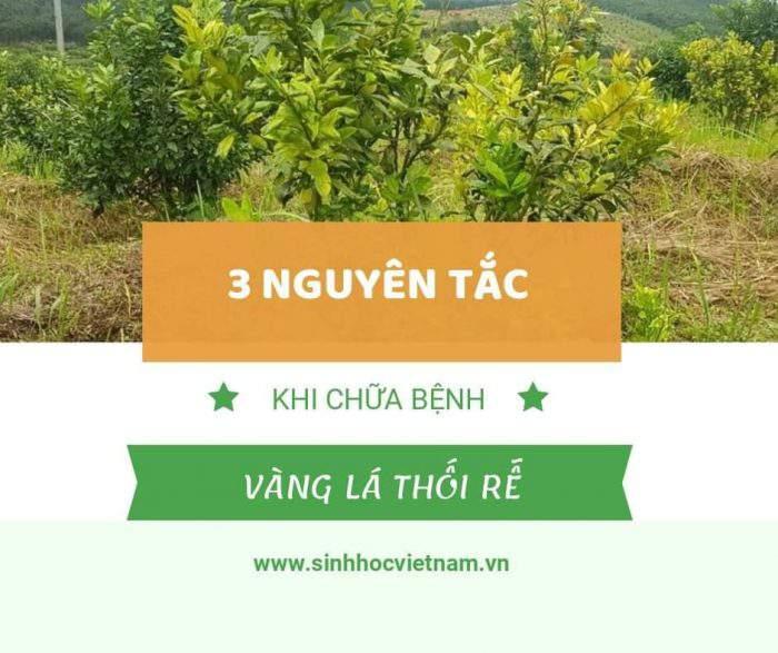 3 nguyên tắc xử lý cây bị vàng lá thối rễ