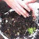 Cách kiểm tra sức khỏe đất canh tác để cải tạo đất đúng cách