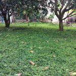 Làm sạch cỏ để cải tạo đất và tư duy của nông nghiệp bền vững