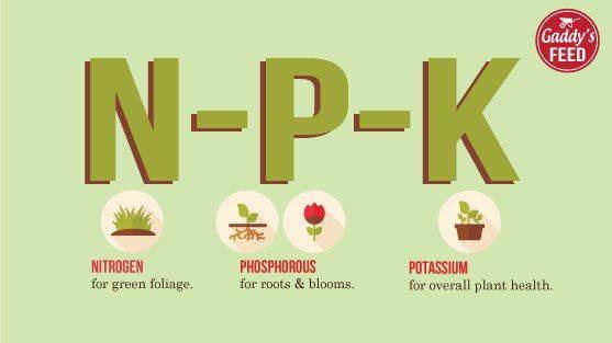 Quản lý dinh dưỡng NPK