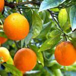 Amino axit – tầm quan trọng của amino axit trong quá trình chăm cây