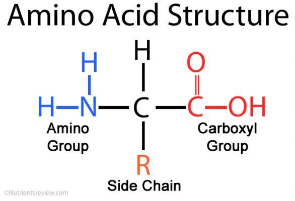 16 tác dụng của amino acid trong canh tác cây trồng