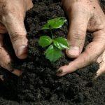 3 bước cải tạo đất vườn kém năng suất