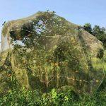 3 bước phòng tuyệt đối bệnh vàng lá thối rễ trước mùa mưa
