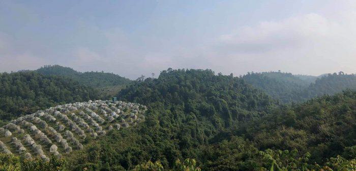 vườn sử dụng amino acid ở Hà Tĩnh