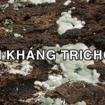 Nấm đối kháng trichoderma là gì và vai trò của chúng trong cach tác