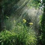 Mưa đầu mùa ảnh hưởng như thế nào tới cây trồng