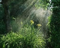 mưa đầu mùa