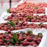 Xuất khẩu nông sản sang Trung Quốc: Thay đổi để hướng đến chính ngạch