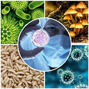 Chế phẩm trừ sâu sinh học