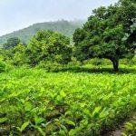 """Tầm quan trọng của """"đất sống"""" đối với cây trồng"""