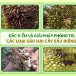 Đặc điểm và giải pháp phòng trị các loại sâu hại cây sầu riêng