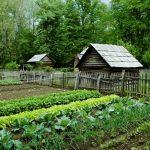 Nông nghiệp hữu cơ – xu hướng canh tác của nông nghiệp Việt Nam và Thế giới