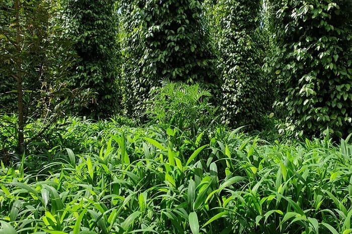 Giữ lại thảm cỏ để cải tạo đất vườn